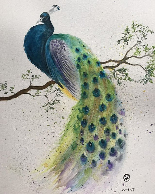 water-colour painting of a peacock