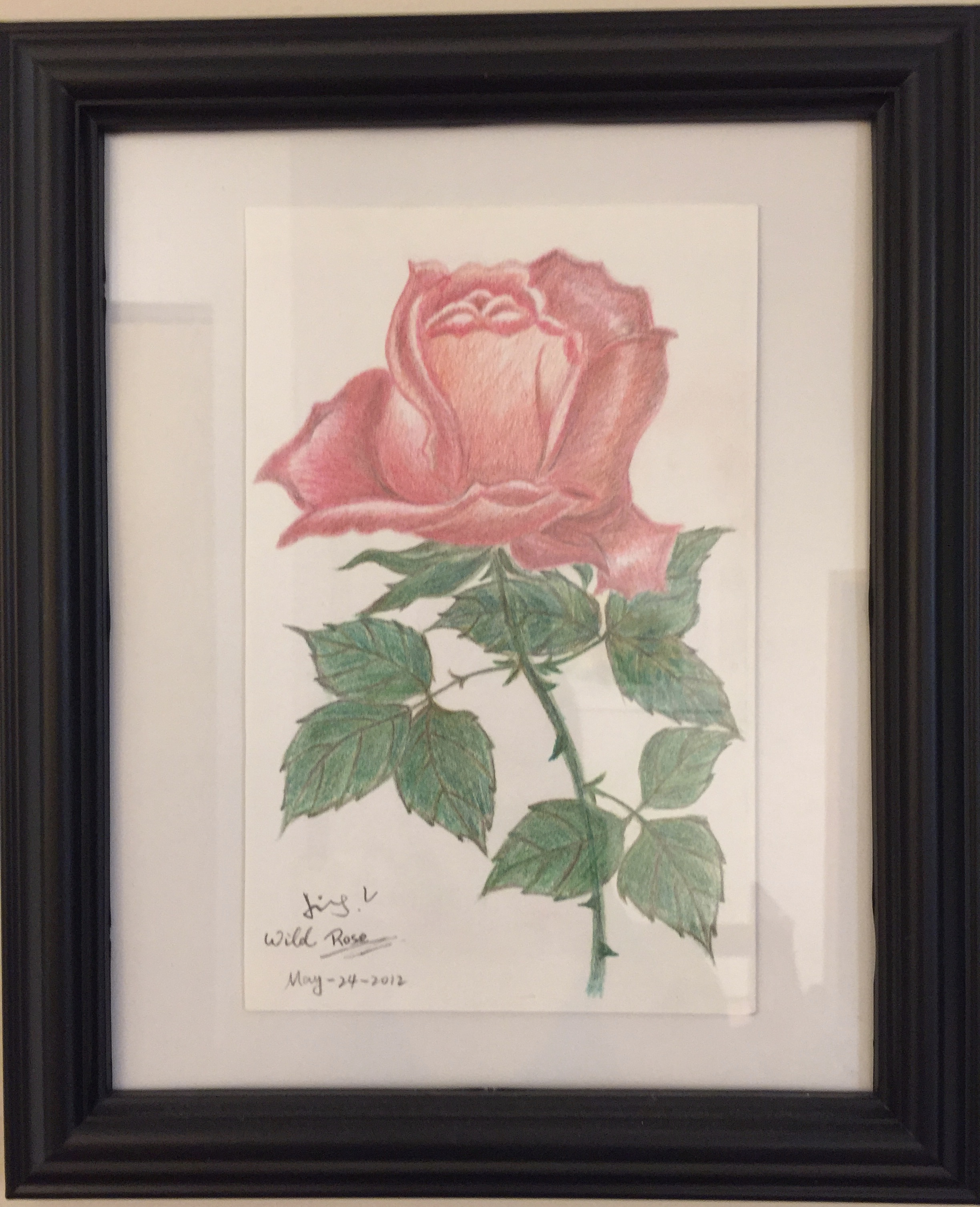 colour pencil drawing of a wild rose