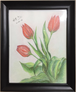 colour pencil drawing of tulips