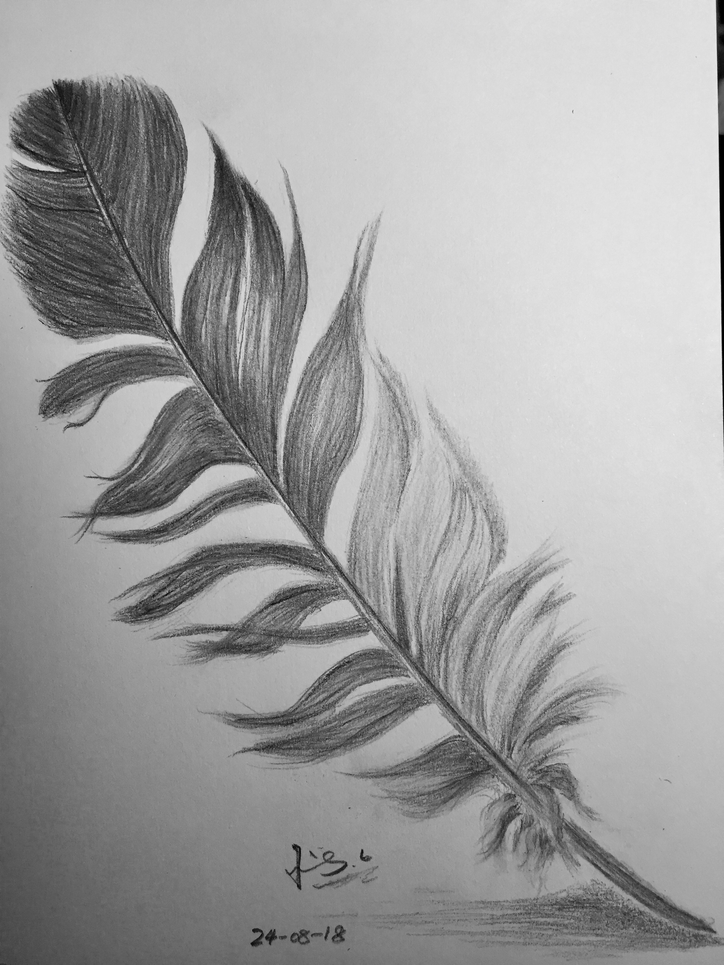 pencil drawing of feather