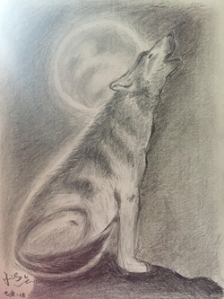 pencil drawing of a wolf in full moon