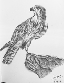 pencil drawing of an eagle