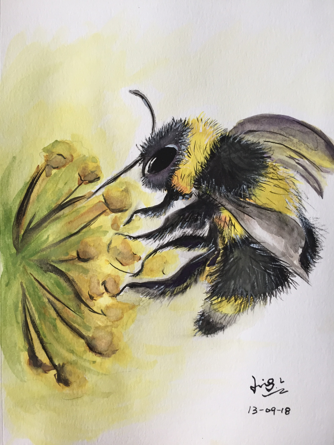 water-colour painting of a bee in flower