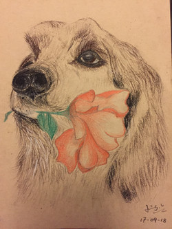 pencil drawing of a dog head 2