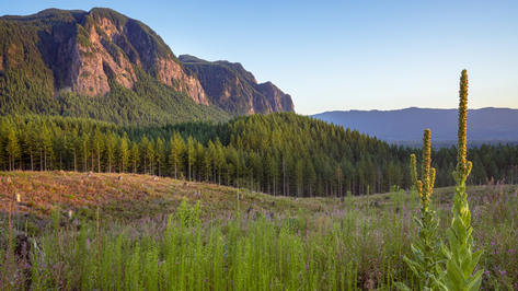 Borders on Forestland, including Snoqualmie National Forest