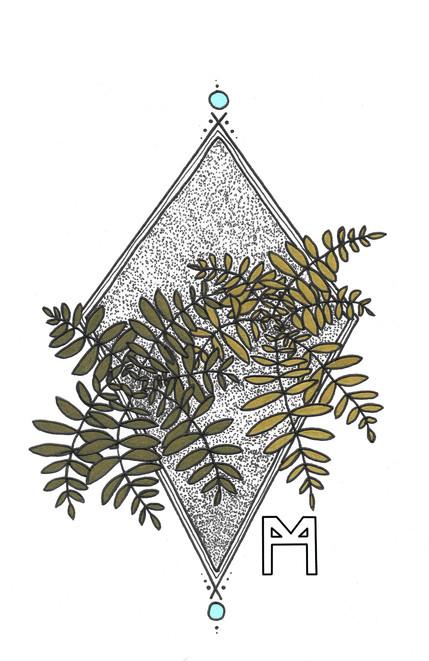 fern 3