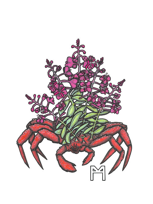 Fire King Weed Crab