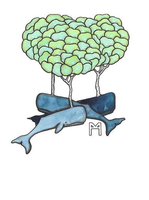 Birch Whales