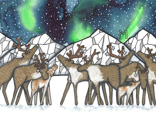 Caribou Night