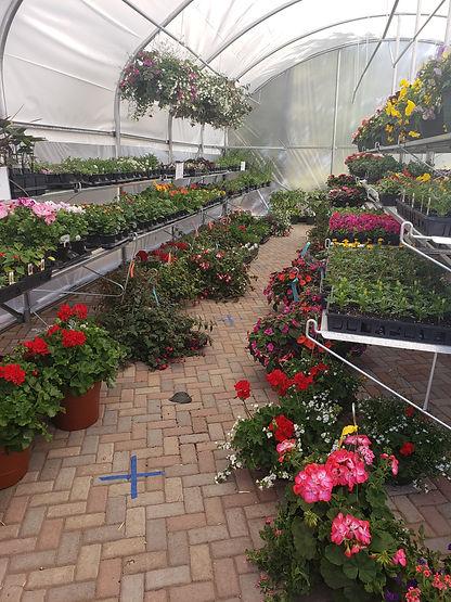 Greenhouse 2020.jpg 1.jpg