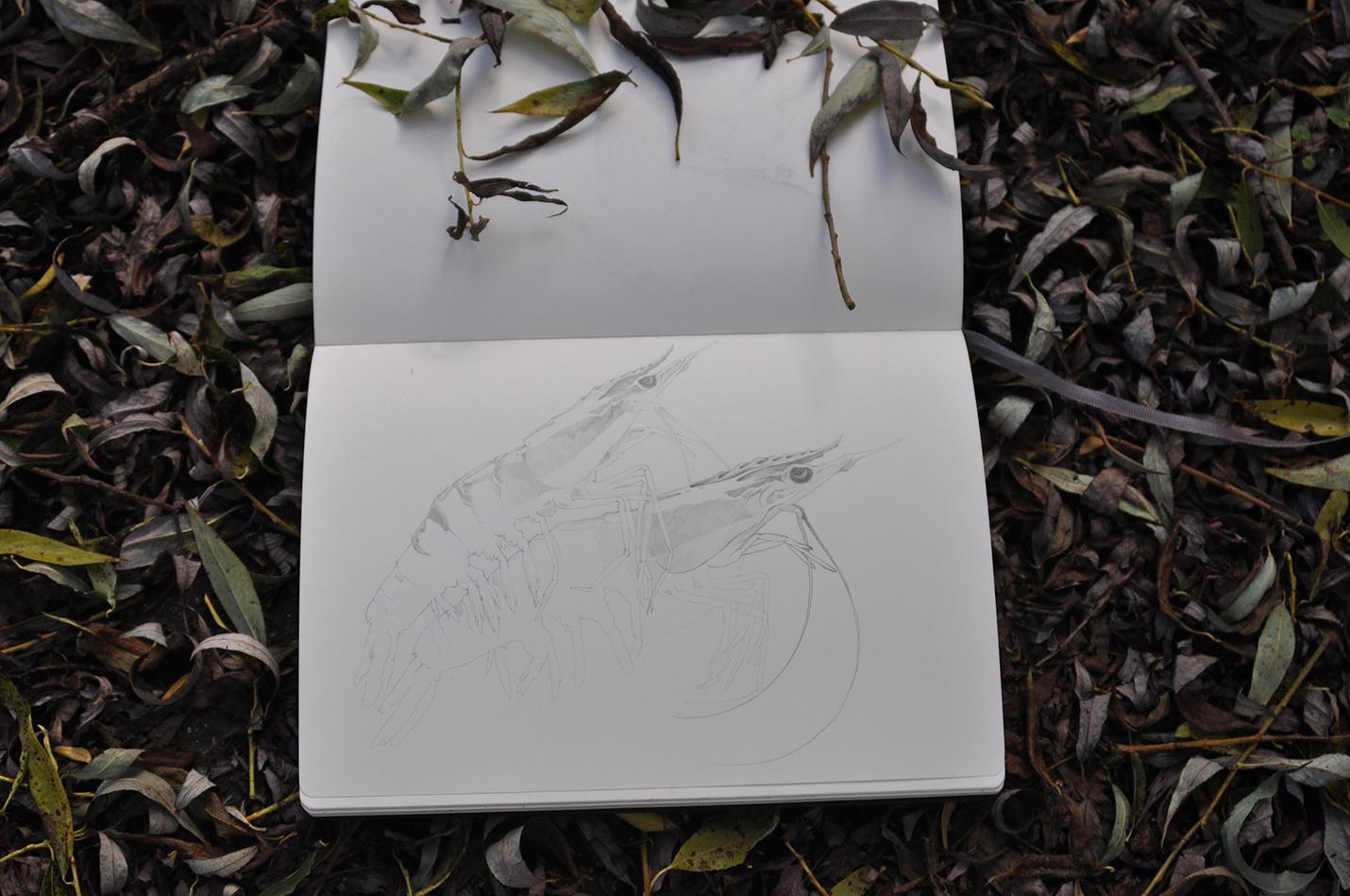 карандашный скетч 15