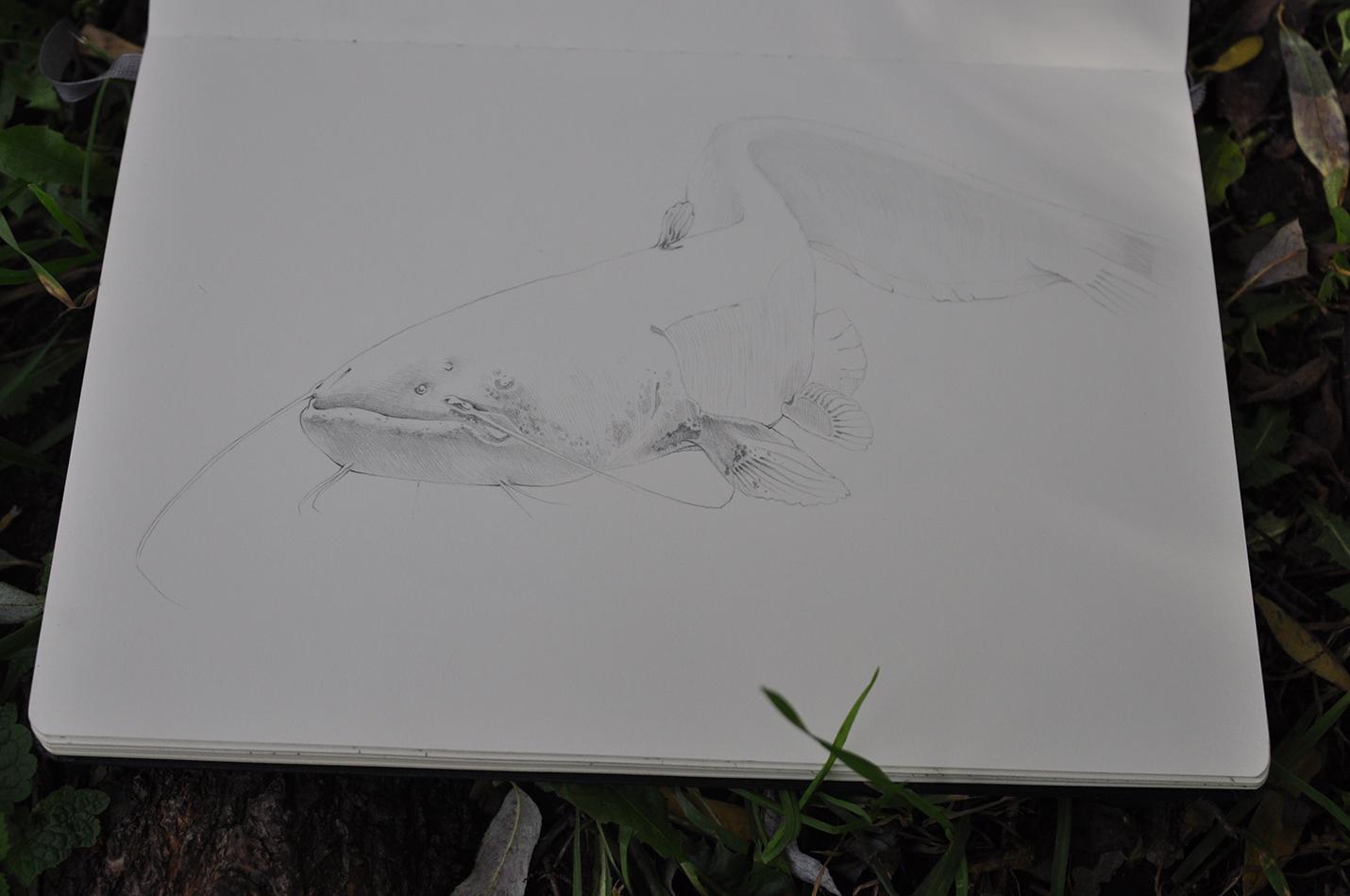 карандашный скетч 9