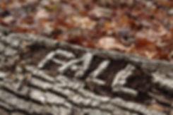 lo-res_Seasonal Series 08_2012_01.jpg