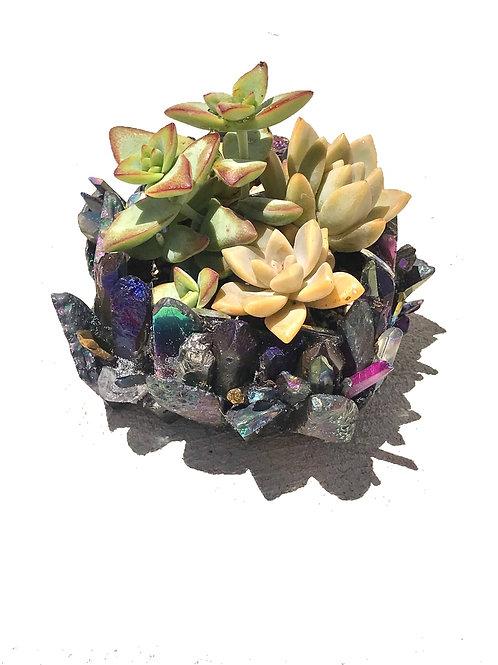 Succulents Plants Rainbow Aura Quartz
