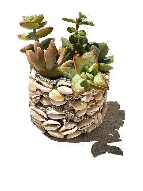 Seashells Crystal  Succulents Plants