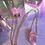 Thumbnail: Aura Pink Quartz
