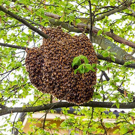 swarm2.jpeg
