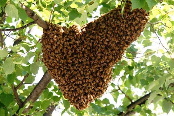 swarm1.jpeg