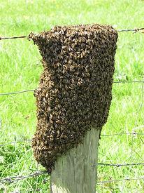 swarm3.jpeg