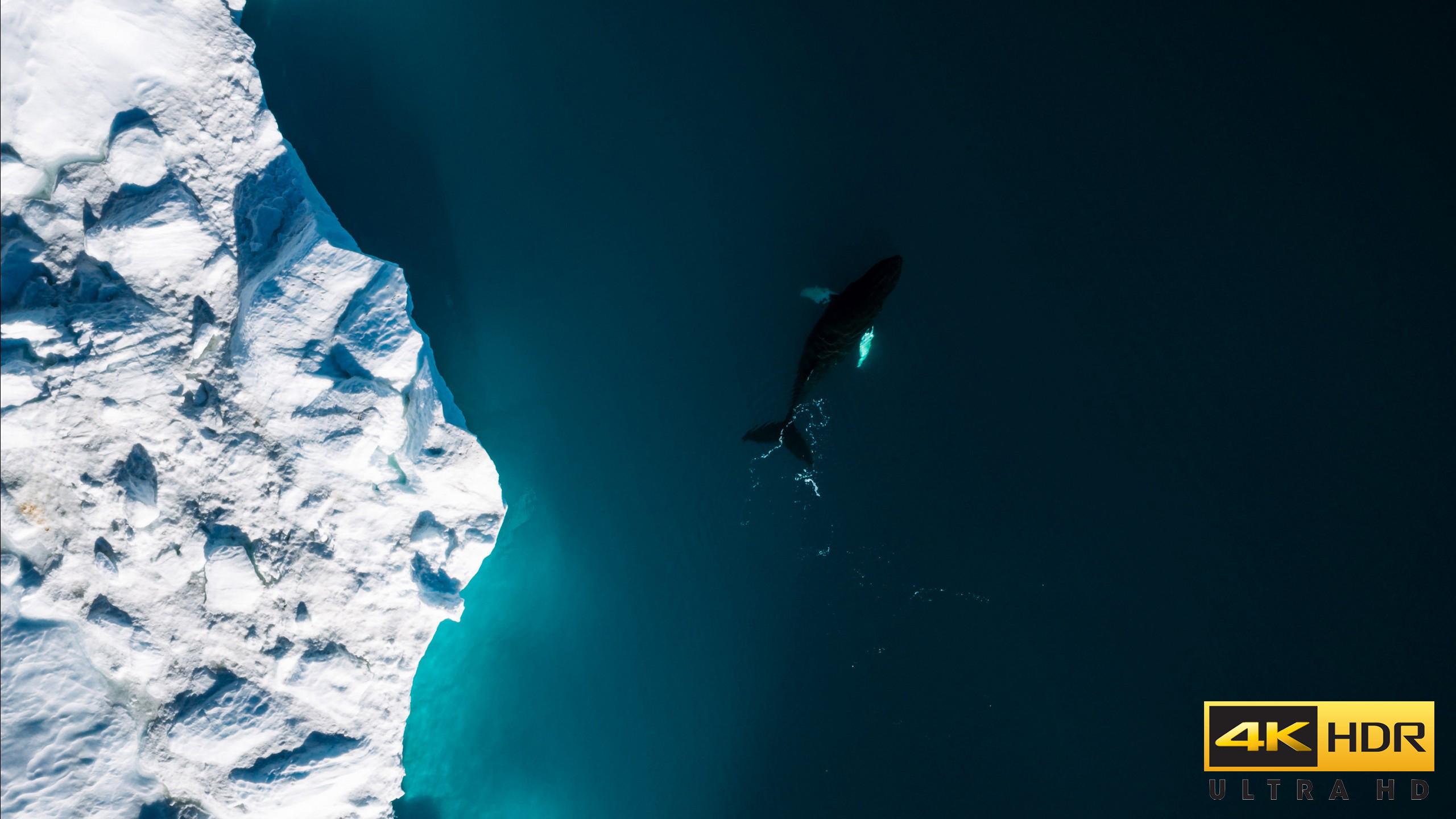 iceberg__whale-2560x1440