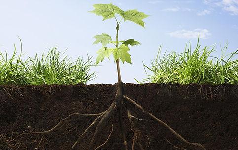 Do Plants farm for Microorganisms?