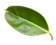 Leaf-1-blurred.png