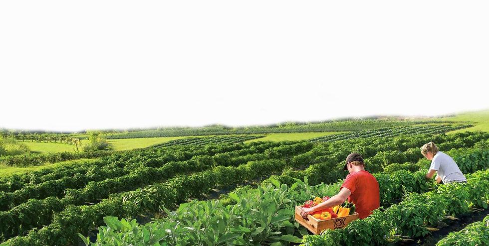 organic-fertilizer-commercial-landing-pa