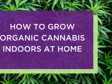 How to Grow Organic Cannabis Indoors at Home