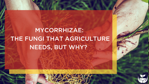 Mycorrhizae – The fungi that agriculture needs, but why?