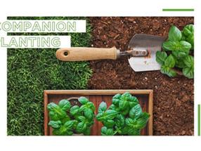 Companion Planting 101