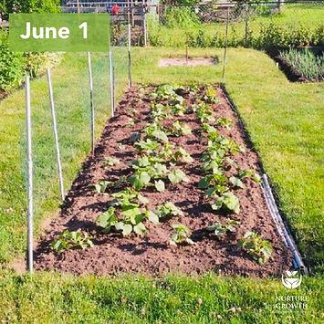 organic-fertilizer-non-treated-squash-nurture-growth-bio.jpg