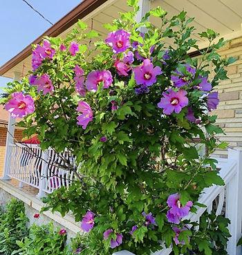 organic-fertilizer-flowers-testimonial-n