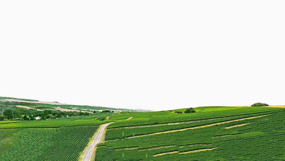 organic-fertilizer-nurture-growth-bio-we