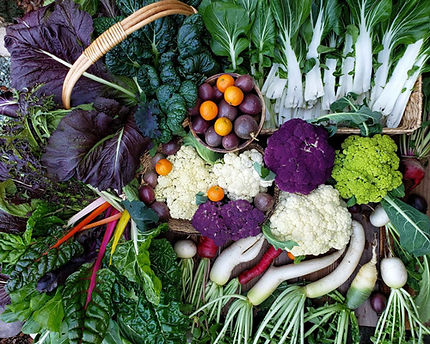 Cool Vegetables to Plant in Fall