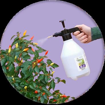 Step3-spraying-nurturegrowth-2.png
