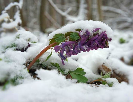 How to Build Healthy Soil in your Garden over Winter