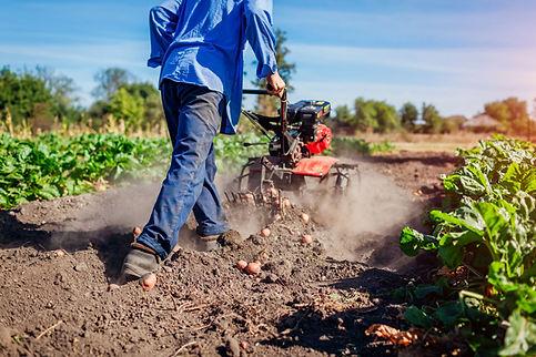 Replenishing the Soil after Harvest