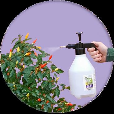 Step3-spraying-nurturegrowth-second-hand