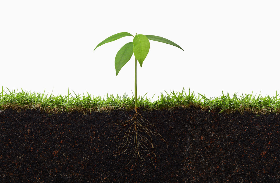 Plant-in-the-middle-with-roots.jpg