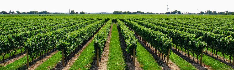 nurture-growth-bio-vineyard-1980.jpg