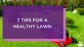 7 Tips for a Healthy Lawn