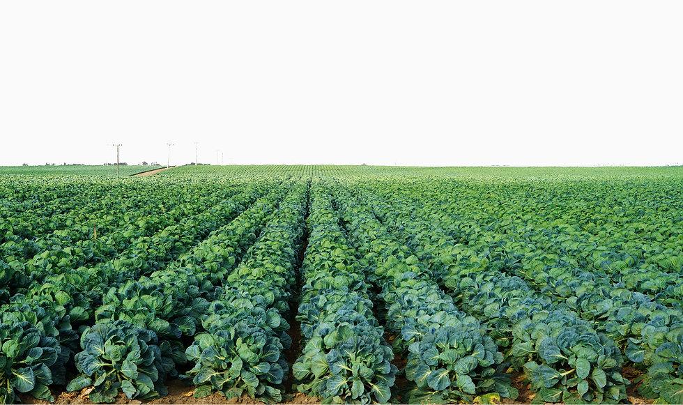 organic-fertilizer-nurture-growth-bio-te