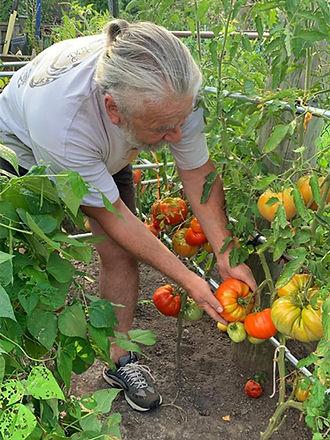 organic-fertilizer-tomatoes-testimonial-