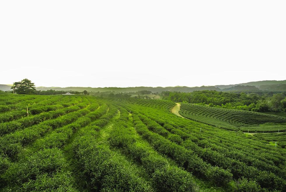 organic-fertilizer-certificates-nurture-