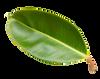 Leaf-1-med-blurred.png