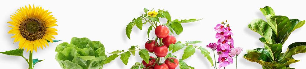 orgnic-fertilizer-vegetables-fruits-flow