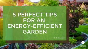 5 Perfect Tips for an Energy-Efficient Garden