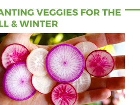 Planting Veggies for the Fall & Winter