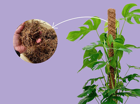 How to Create a Moss Pole for Indoor Houseplants
