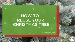 How to reuse your Christmas Tree